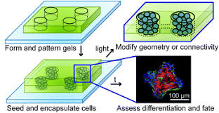 3D Hydrogels for Cell Culture
