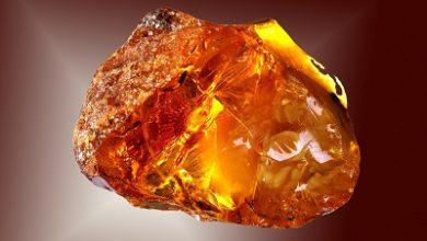Global Amber Acid Market