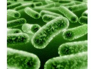 global probiotic strains market